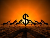 Ants holding Dollar. Against the sun,showing their teamwork for successful earning Stock Photos