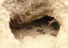 Ants in a hole Royalty Free Stock Images