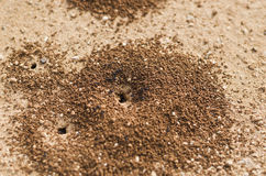 Ants hole Royalty Free Stock Photo