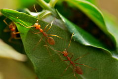 The ants house Royalty Free Stock Images