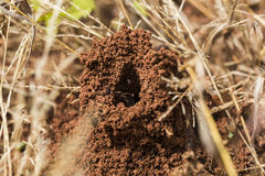 Ants In The Nest Stock Photos