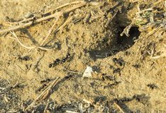 Ants knest hole in the ground Stock Photo