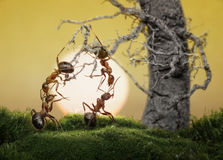 Ants know to play games, scientific fact. Ants know to be lazy and play games, scientific fact Royalty Free Stock Photo