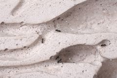 Ants life Stock Photography