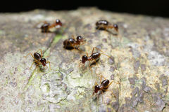 Ants looking for food on the ground Stock Photos
