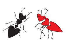 Ants in love. Vector illustration of two ants in shape of hearts Stock Photo