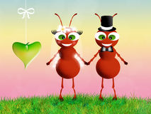 Ants in love Stock Photos