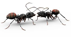 Ants Making Friends. Two ants meeting for the first time, or conversing with eachother on the day's work and productivity stock illustration