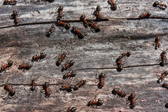 Ants and match. In the chaotic movement of ants there is a system, the program. And we don't understand it yet Stock Photo