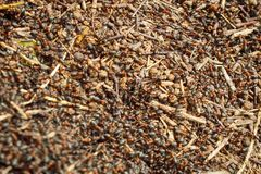 ants moving in anthill Marco Royalty Free Stock Photos