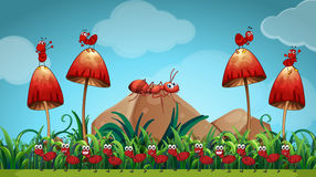 Ants in the mushroom garden Royalty Free Stock Image