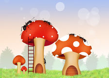 Ants on mushrooms Royalty Free Stock Photography