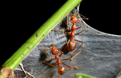 The ants in the nature Stock Photos