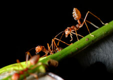 The ants in the nature Stock Photography