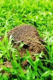 Ants nest Stock Photos