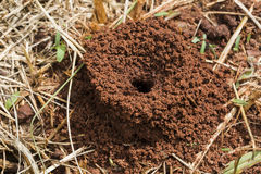 Ants in the nest. Nature ants stock image