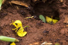 Ants in the nest. Nature ants royalty free stock photo