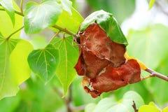 Ants nest on tree Stock Photos