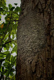 Ants nest. In the tree Stock Images