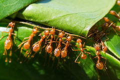 The ants are nesting help Royalty Free Stock Images