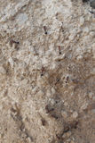 Ants on path Stock Photos