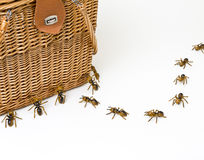 Ants At A Picnic. You can't have a picnic without a few ants.  A row of ants discover a tasty meal Royalty Free Stock Images