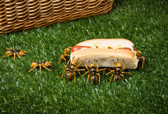 Ants At A Picnic Stealing Food Royalty Free Stock Photos