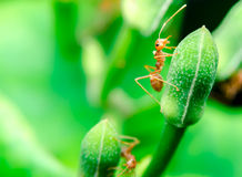 Ants on plant Stock Photography