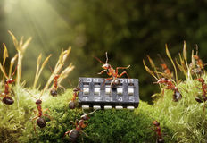 Ants play music on microchip, fairytale. Piano concerto in anthill, ant and microchip, focused on maestro Stock Photos