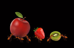 The Ants powerful carrying apple, strawberry and kiwi Stock Photos