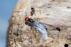 Ants and queen close up. On trunk stock photos
