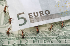 Ants raising euro Stock Photo