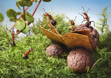 Ants read book. Red forest ants read book stock photo