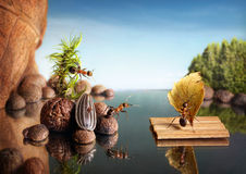 Ants rescue on water stock images