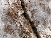 Ants on rock Stock Photos