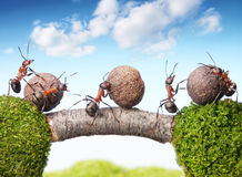 ants rolling stones on bridge, teamwork Stock Image