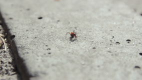 Ants running at asphalt and share the food stock video