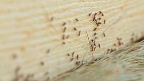 Ants Running on Cutting Tree stock video footage