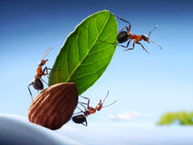 Ants sight land in ocean, crew of yacht, teamwork Royalty Free Stock Photos