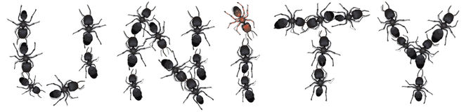 Ants spelling unity. Group of ants spelling the word unity Stock Image