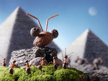 Ants sphinx and pyramiding, Ant Tales. Ants civilization, sphinx and pyramid, Ant Tales Stock Photography