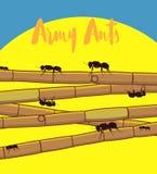 Ants on Sugarcane Sticks Stock Photo