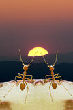 Ants on sunset. In hopefully of life Royalty Free Stock Photos