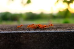 Ants take their food to the nest Stock Images