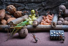 Ants teach grasshopper to work , ant tales Royalty Free Stock Photos