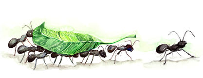 Ants team vector illustration
