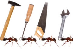 Ants teamwork Royalty Free Stock Images