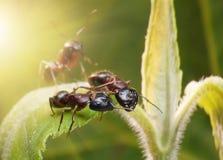 Ants top secret. Ants talking top secret, fantasy royalty free stock photo