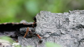 Ants on a tree stock footage