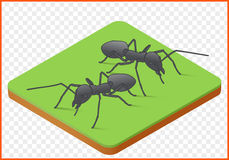 Ants vector picture Stock Photo